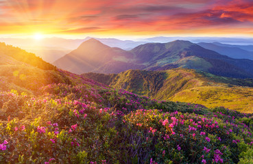 Amazing colorful sunrise in mountains with colored clouds and pink rhododendron flowers on foreground. Dramatic colorful scene with flowers