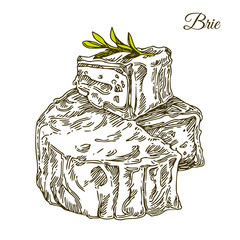 Slice and wheel of Brie cheese and leaf. Engraving style. Vector illustration.