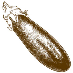 engraving illustration of eggplant