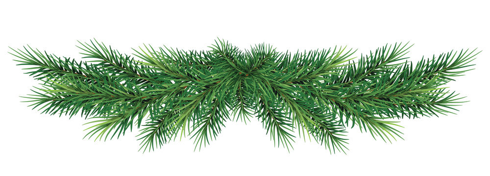 long garland of Christmas tree branches . Vector illustration. Eps 10. Realistic fir-tree border, frame isolated on white. Great for christmas flyers, party posters.