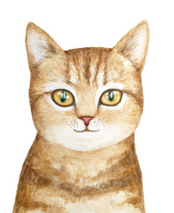 Cute little one tabby kitten pet portrait. Looking at camera, big beautiful shiny sparking eyes. Interested, adore, in love, nice mood. Hand drawn watercolour illustration, isolated, white background.