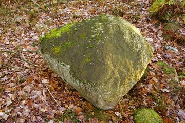Big rock in forrest.