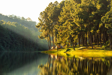 Pine forest park at Pang-ung, Mae Hong Son Province, North of Thailand