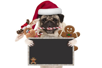 cute Christmas pug dog with santa hat and candy cane, toys and cookies, holding up blank  blackboard sign, isolated on white background