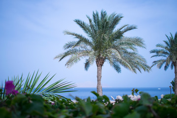 picturesque landscape embankment of an exotic country. vacation in egypt. palm trees on the background of the red sea.