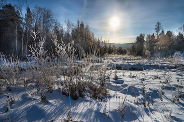 Frosty trees covered with snow in the sunny morning. Beautiful snowy landscape of forest nature.