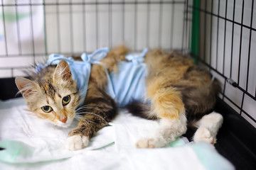 Cat after surgery with bandage in a cage in a veterinary clinic