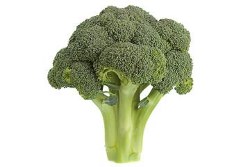 Broccoli cabbage on white