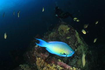 Scuba dive coral reef underwater