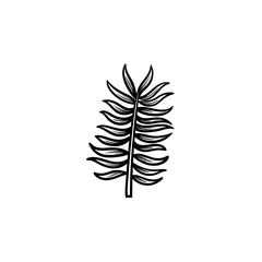 Vector hand drawn leaves of palm tree outline doodle icon. Leaves of palm tree sketch illustration for print, web, mobile and infographics isolated on white background.