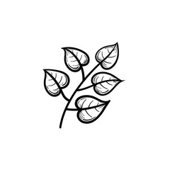 Vector hand drawn linden leaves on branch outline doodle icon. Linden leaves on branch sketch illustration for print, web, mobile and infographics isolated on white background.