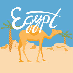 camel in a desery. egypt lettering