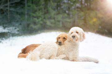 Hunde Kumpels im Schnee liegend