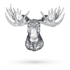 Hand drawn Moose head, Vector