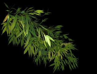 green bamboo lush branch isolated on black illustration