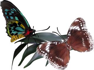 cyan and brown butterflies on dark plant