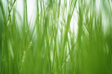 Textured green grass background