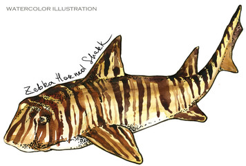 shark. underwater life watercolor illustration. sea animal