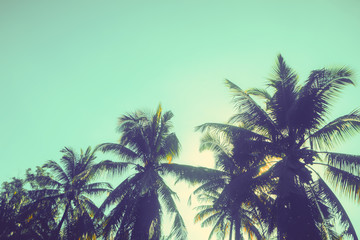 coconut tree in sunset background