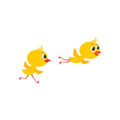 vector cartoon cute baby chicken characters set. Yellow small funny chicks flying and running. Flat bird animal, isolated illustration on a white background.