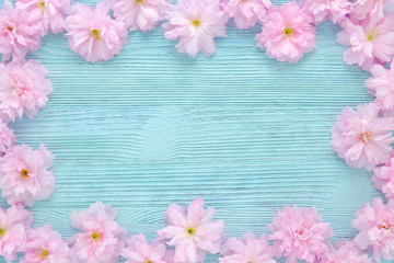 pink cherry fresh flowers frame on blue wooden background flat