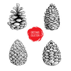 Hand drawn sketch pine cones set. Christmas collection isolated on white background. Vector illustrations.Great for seasonal holiday decor and greeting cards.