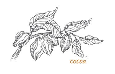 Sketch of cocoa tree branch. Vector