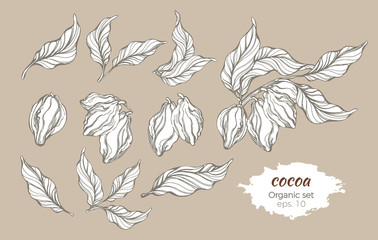Vector set of cocoa tree branches