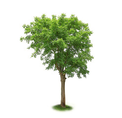 single green tree isolated on white background