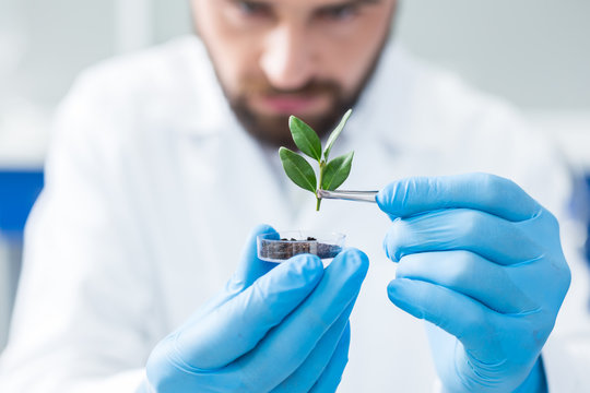 Selective focus of a plant being held with tweezers