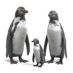 Realistic 3D Render of Humboldt Penguin