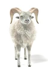 Realistic 3D Render of Ram