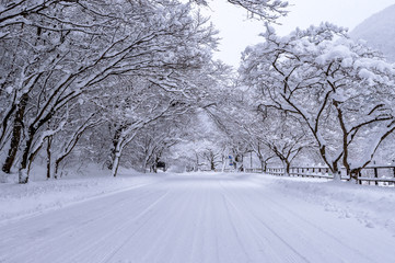 Road and tree covered by snow in winter.
