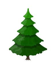 Christmas tree. Spruce, evergreen tree.