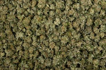 A Big Pile of marijuana Nuggets