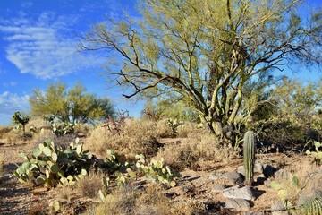 Sonoran Desert Landscape Oro Valley Arizona