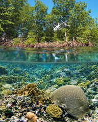 Above and below sea surface mangrove trees over water with a shallow coral reef underwater, Caribbean sea, Central America, Panama