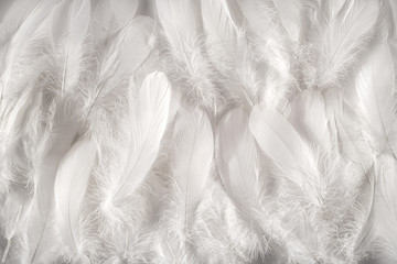 White feathers background Wall mural