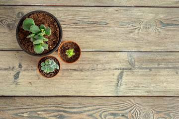 Succulent plants grouped on table