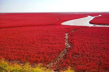 Zelfklevend Fotobehang Rood traf. The Red beach is located in Panjin city, Liaoning, China. This is the biggest wetland featuring the red plant of Suaeda salsa in the world.