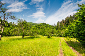 dirt road through abandoned apple orchard. lovely springtime scenery among forested mountains