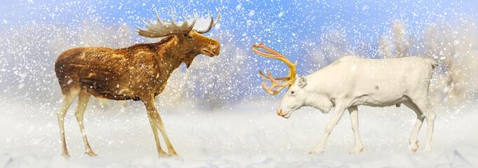 Christmas picture of elk and deer met in a snowy snowstorm