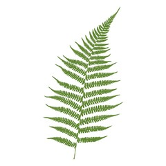 Fern leaf. Green on a white background. Vector illustration.
