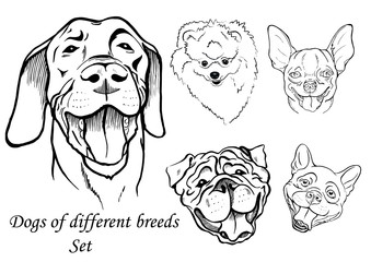 portraits of dogs of different breeds, black and white graphic vector illustration