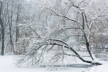Printed roller blinds Art Studio Winter lake beautiful landscape. Trees covered with snow.