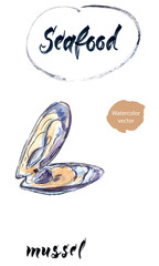 Opened mussel, watercolor hand drawn vector illustration