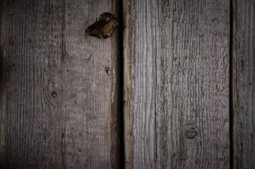 Photo of natural wood for background or texture
