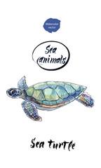Sea turtle, watercolor hand drawn vector illustration