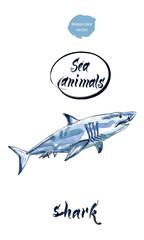 Blue shark, watercolor hand drawn vector illustration