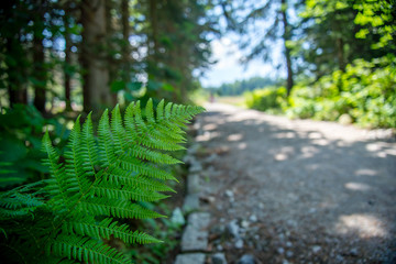 Fresh Green Fern with Blurred Background